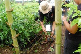 Tree Planting (4)