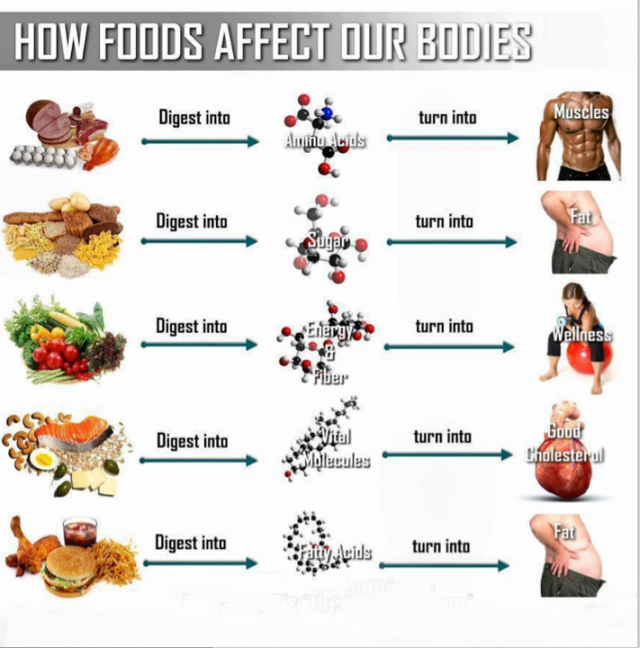 How foods affects our bodies