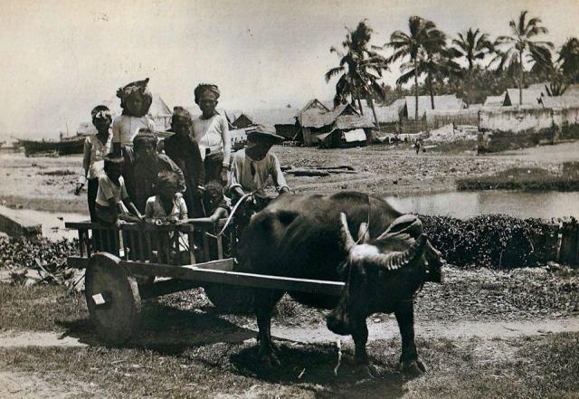 Carabao Cart